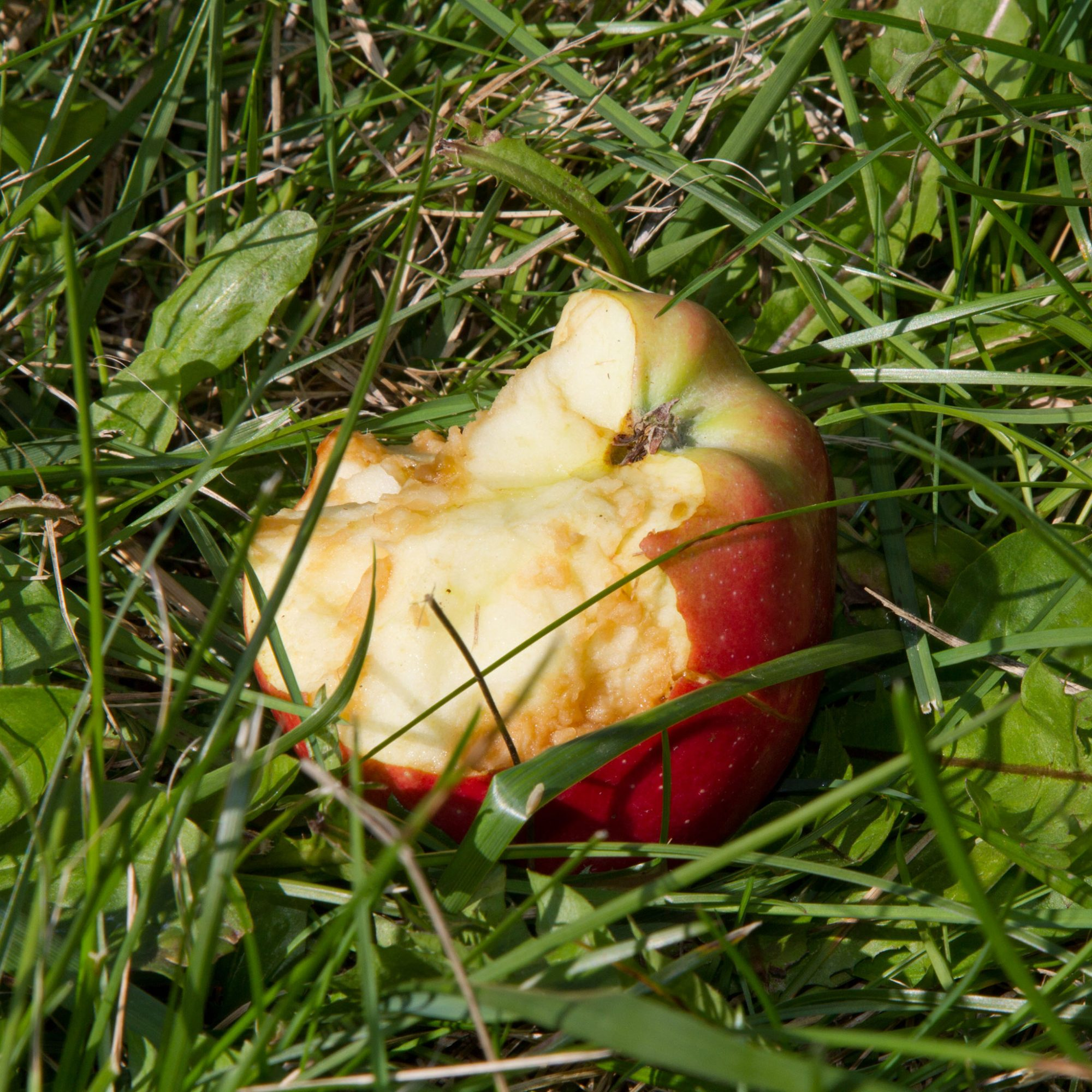 FWX BROWNING APPLES