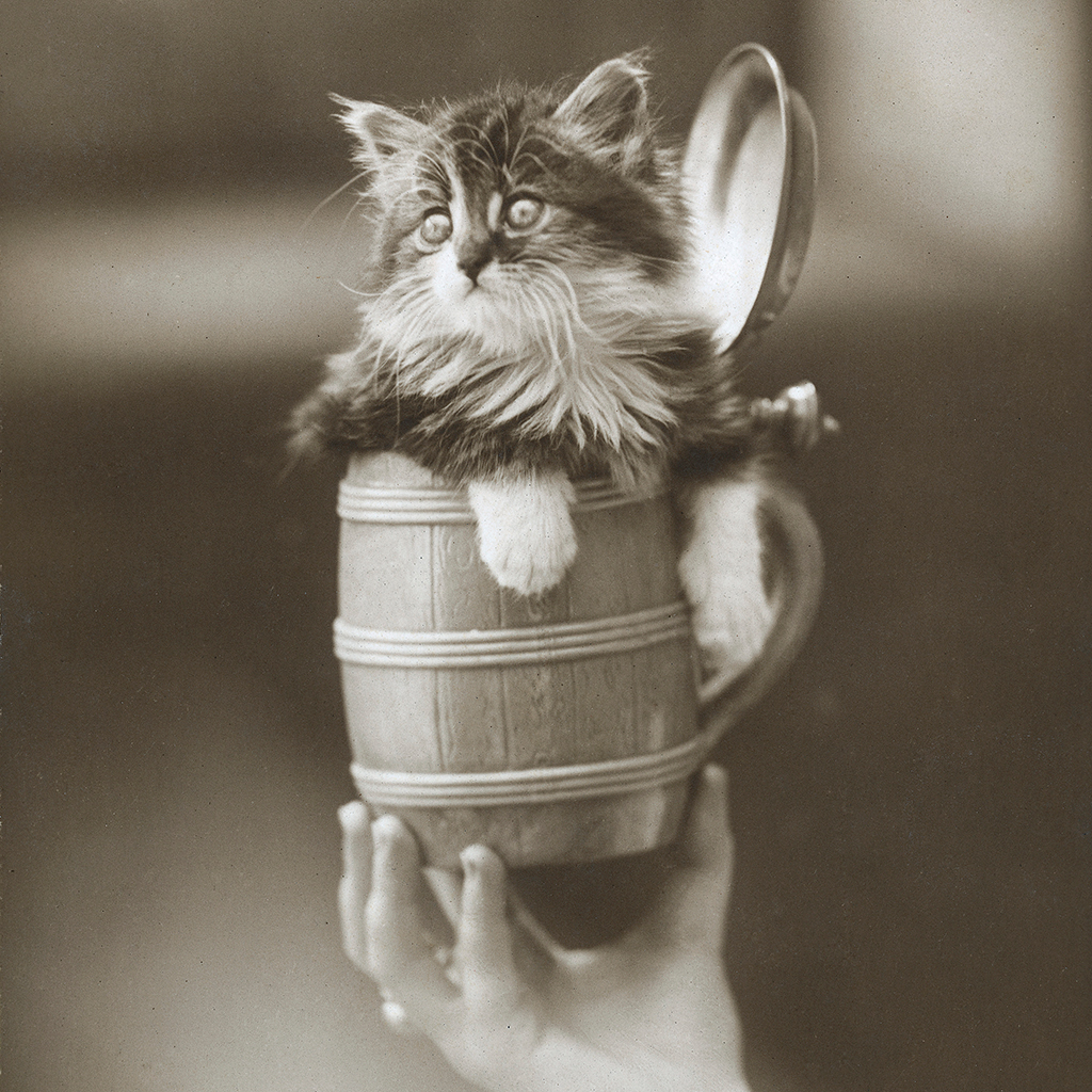 FWX CATS AND BEER INSTAGRAM ACCOUNT
