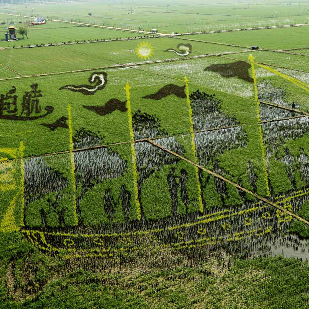 How Do You Turn a Rice Paddy Into a Work of Art?