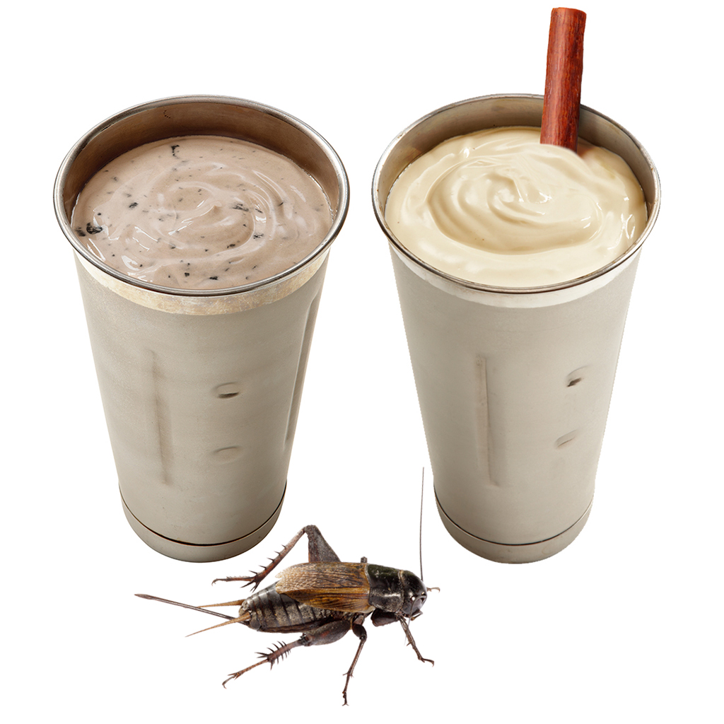 FWX CRICKET MILKSHAKE WITH CRICKET