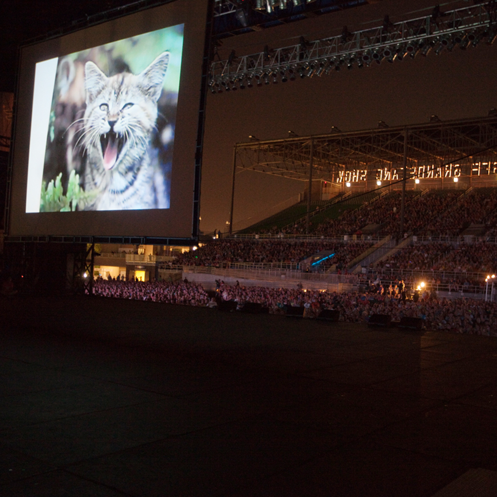 5 of the Best Felines at the Internet Cat Video Festival: An Artistic Analysis