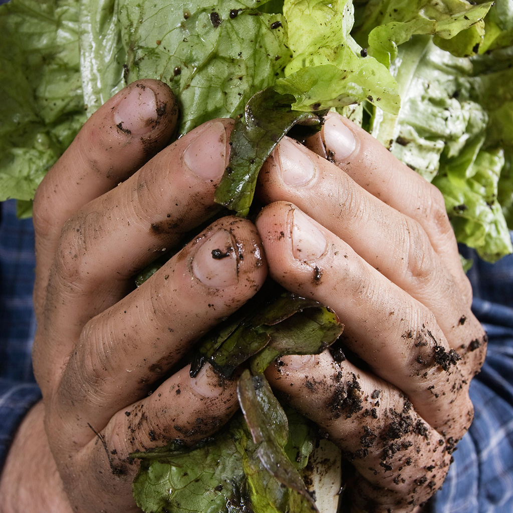 FWX DIRTY LETTUCE