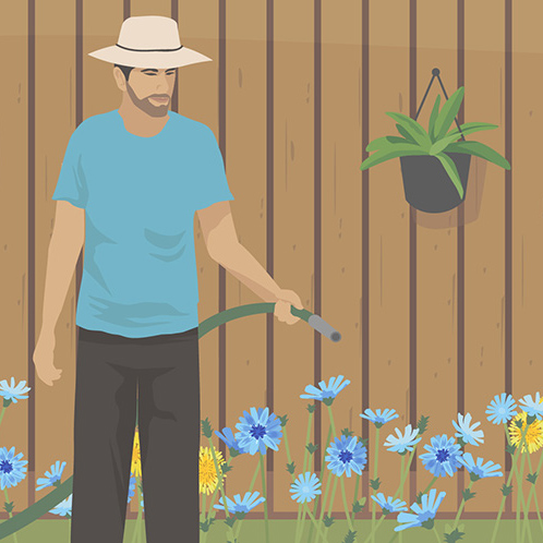 How to Eat the Wild Plants in Your Yard