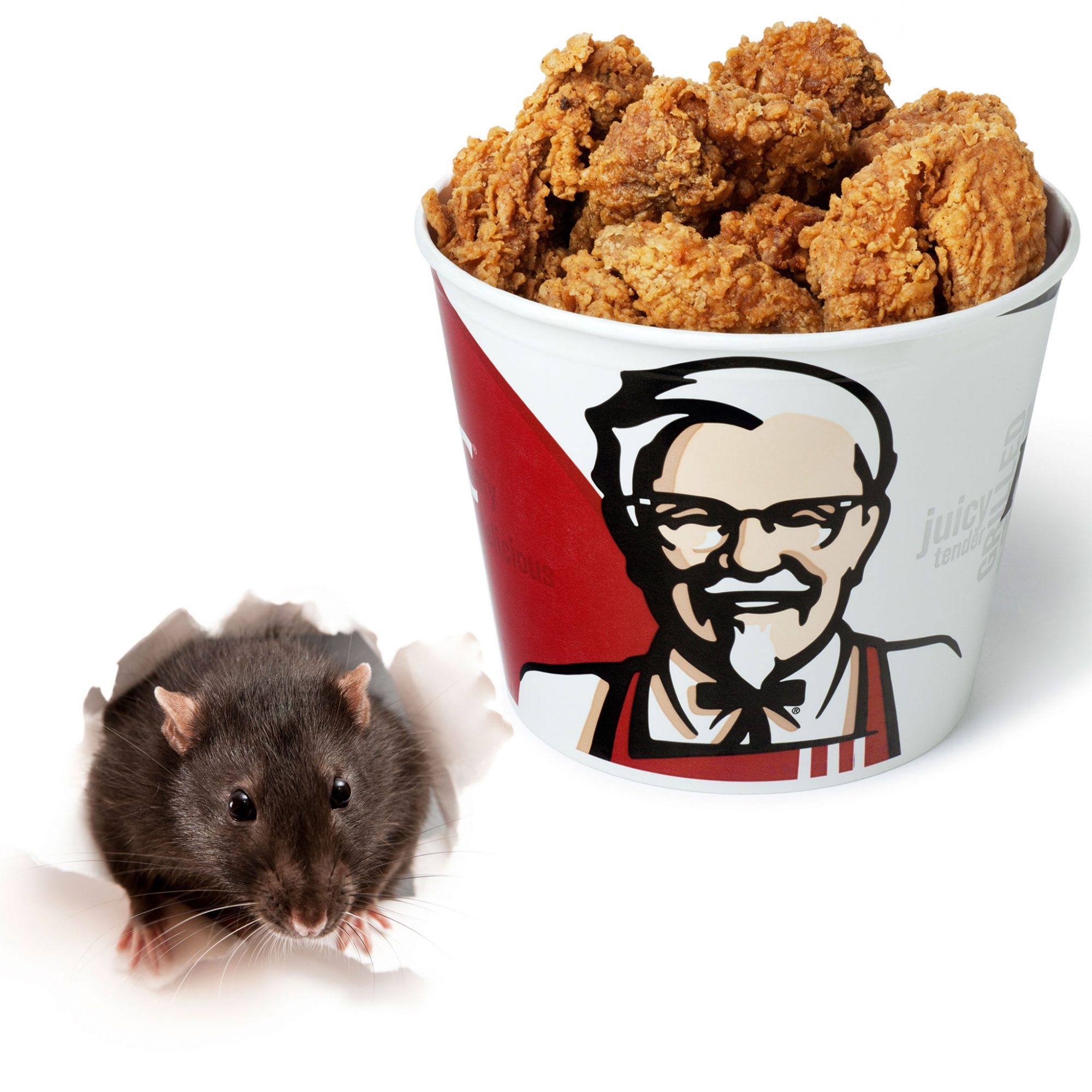 The Deep-Fried Rat From KFC Is Almost Certainly Not a Deep-Fried Rat ...