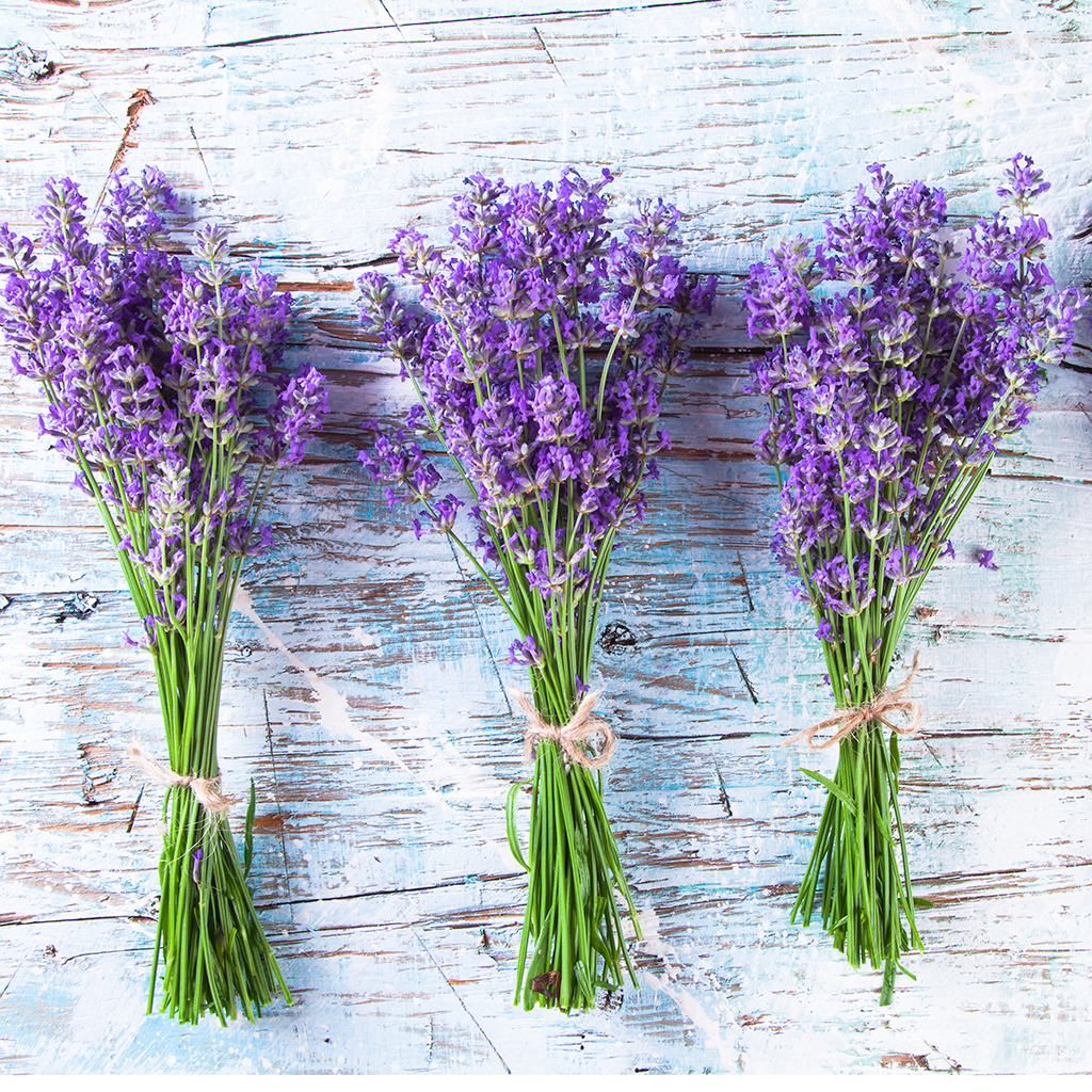 FWX LAVENDER FOR TRUST