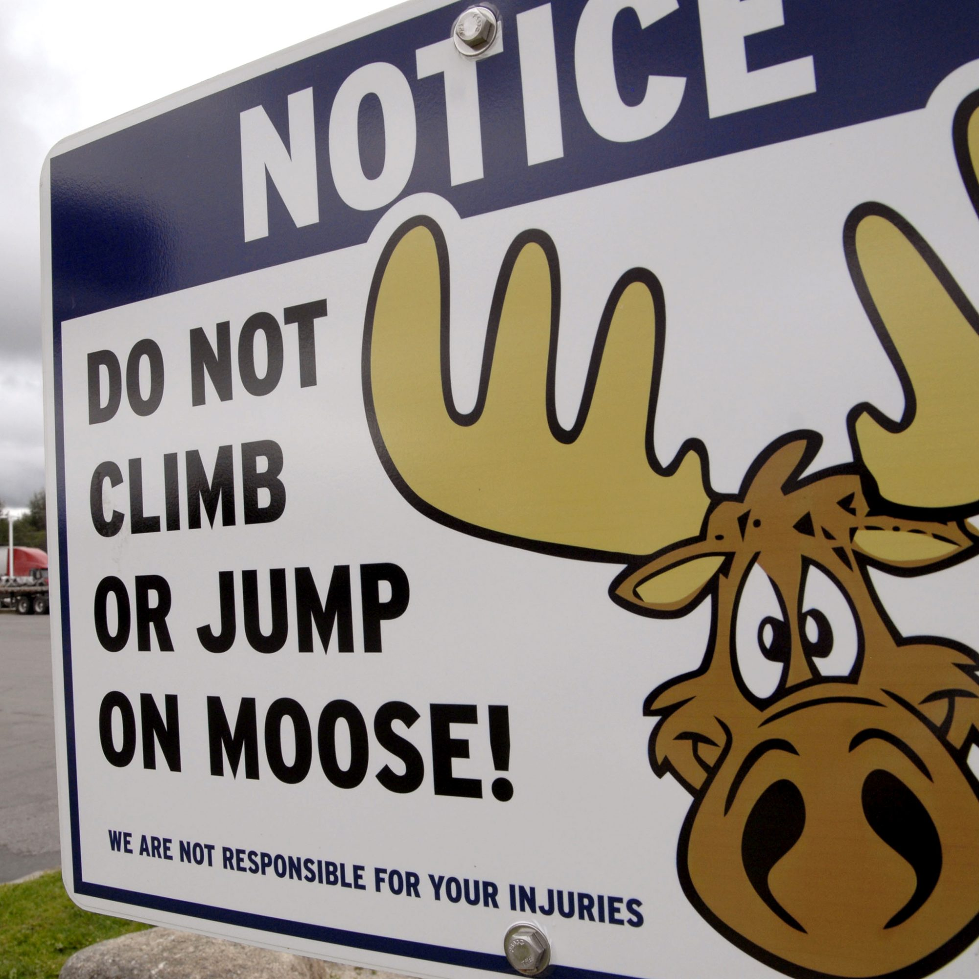 Can You Help This Poor Man Find His Moose Roasts?