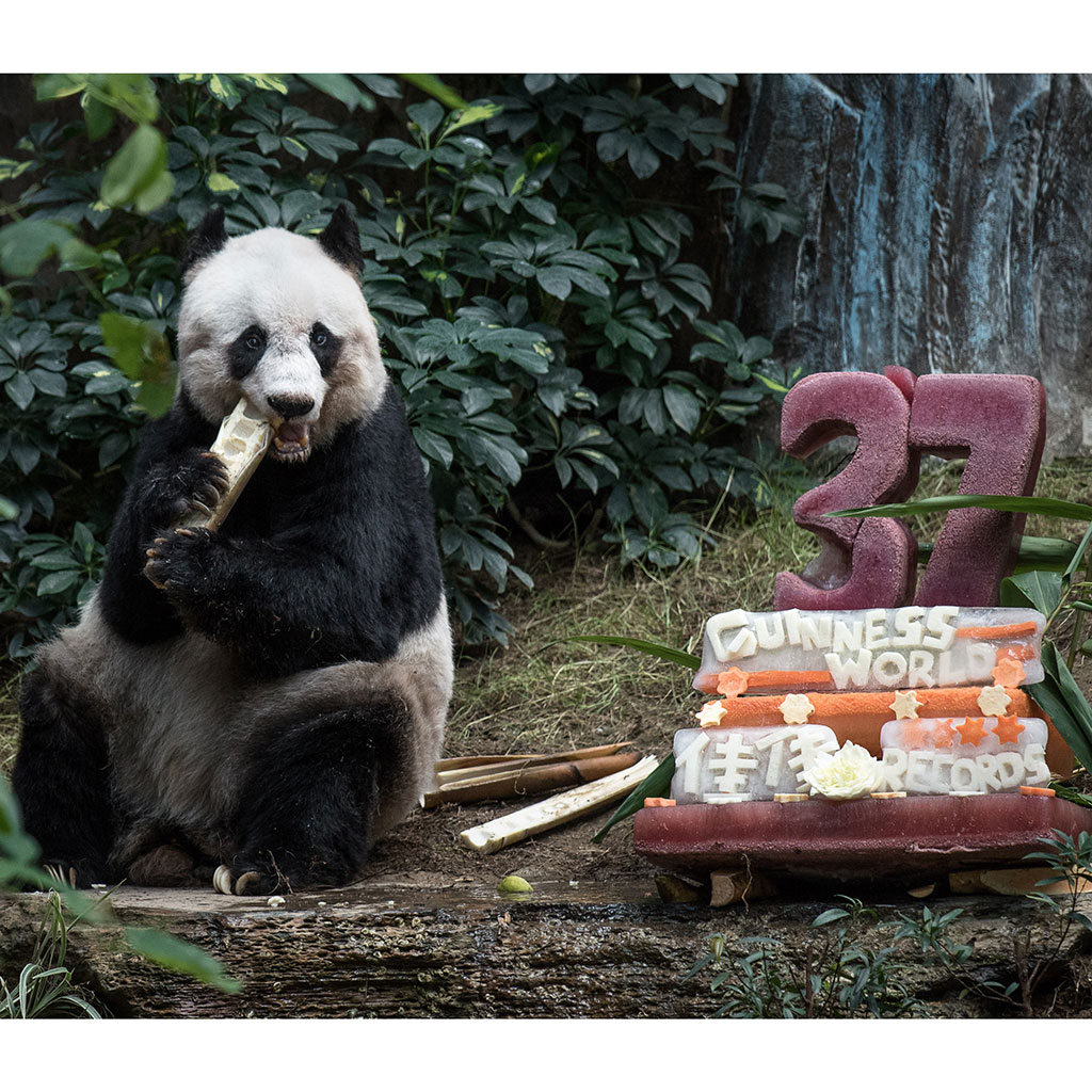 FWX OLDEST PANDAS BIRTHDAY CAKE