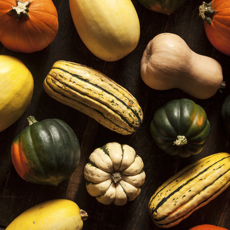 Everything You Need to Know About Cooking with Squash