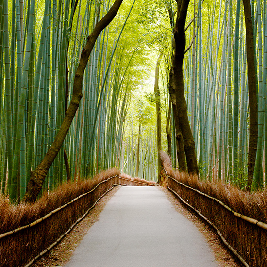 Stroll through the Sagano Bamboo Forest in Japan.