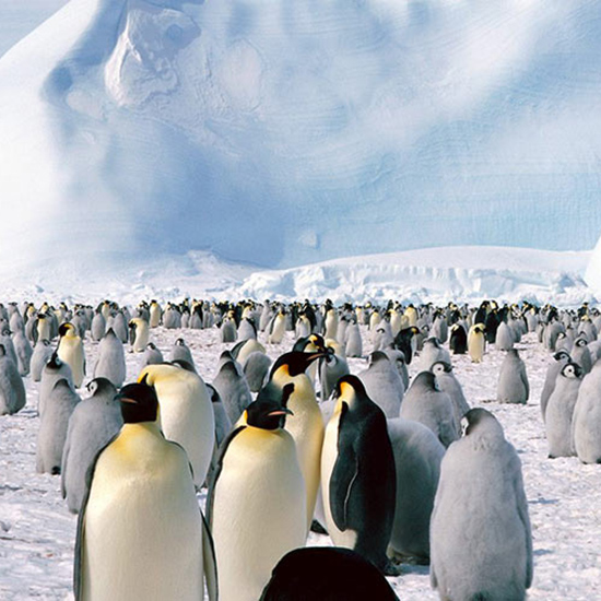 Take a Cruise to Antarctica