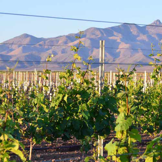 Best Shiraz: Verde Valley, Arizona