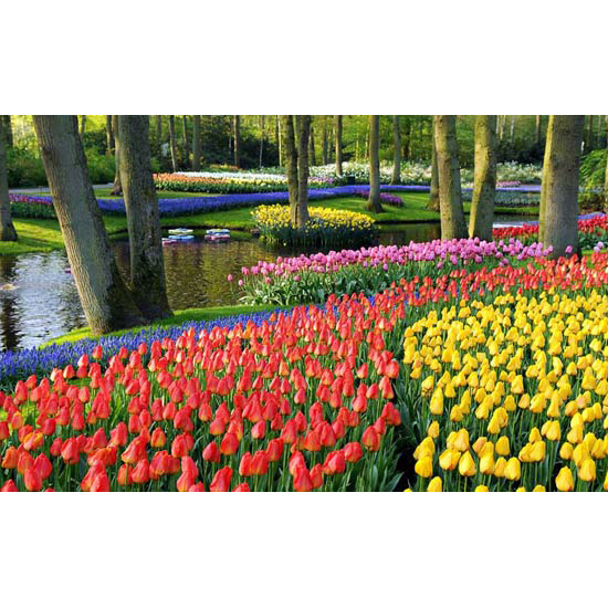 Keukenhof, Lisse, The Neterlands
