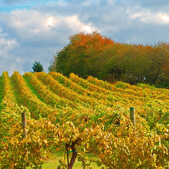 Best For Wine Tasting: Willamette Valley, Oregon