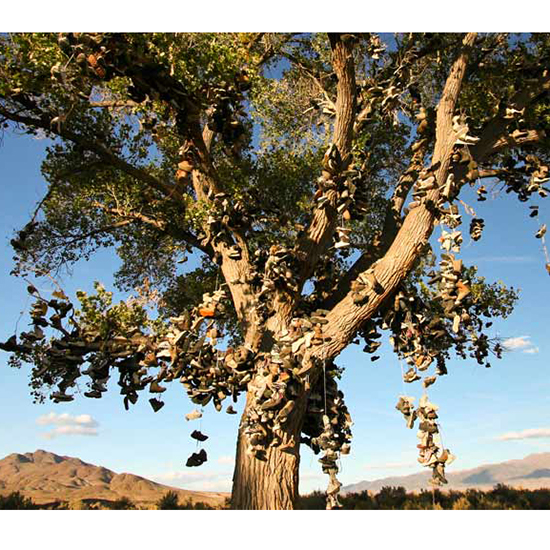 Shoe Tree (Middlegate, Nevada)
