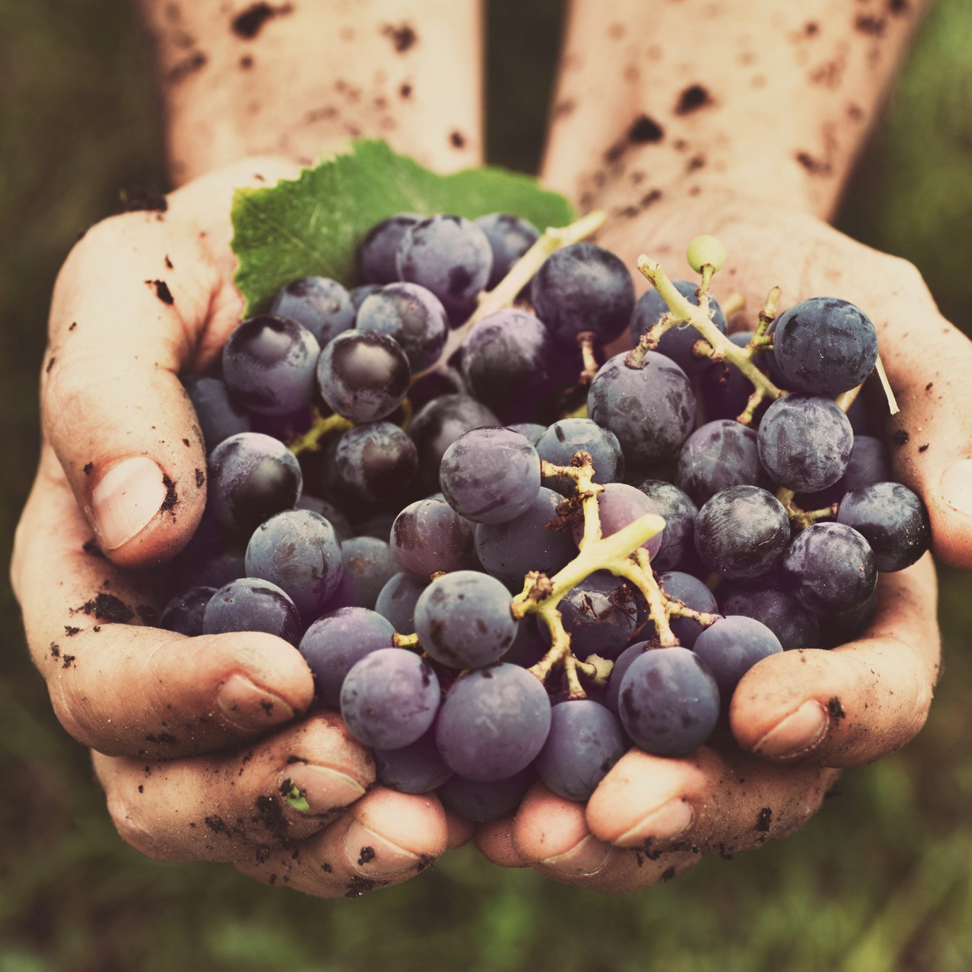 FWX REALLY EXPENSIVE GRAPES