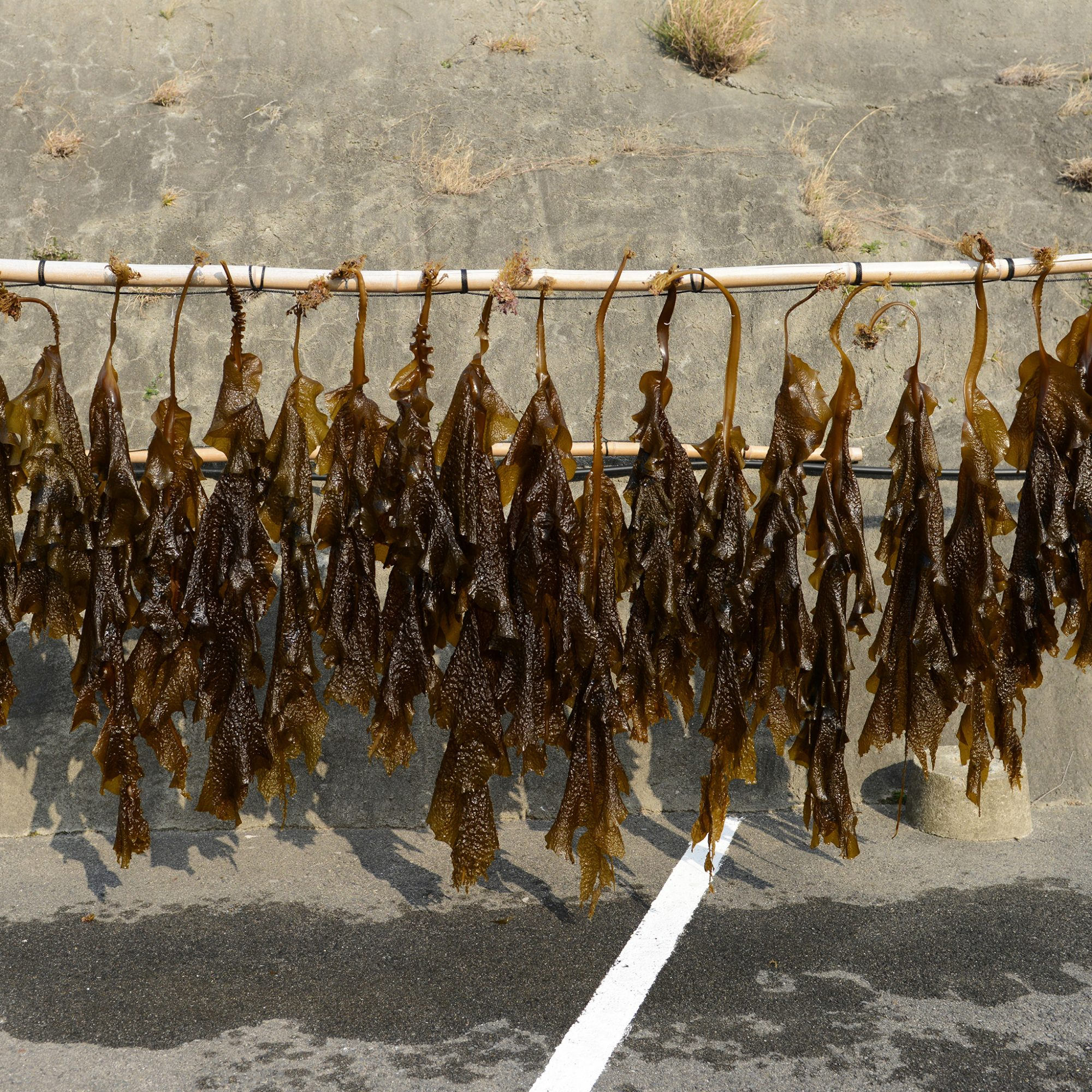 FWX SCIENTISTS THINK WE SHOULD EAT SEAWEED EVERY DAY