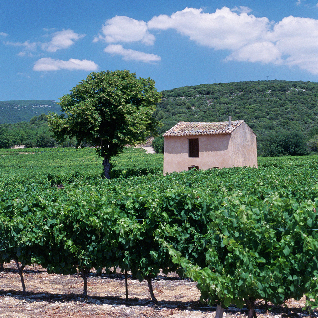 FWX THE MISTRAL WHAT MAKES FRENCH WINE GREAT
