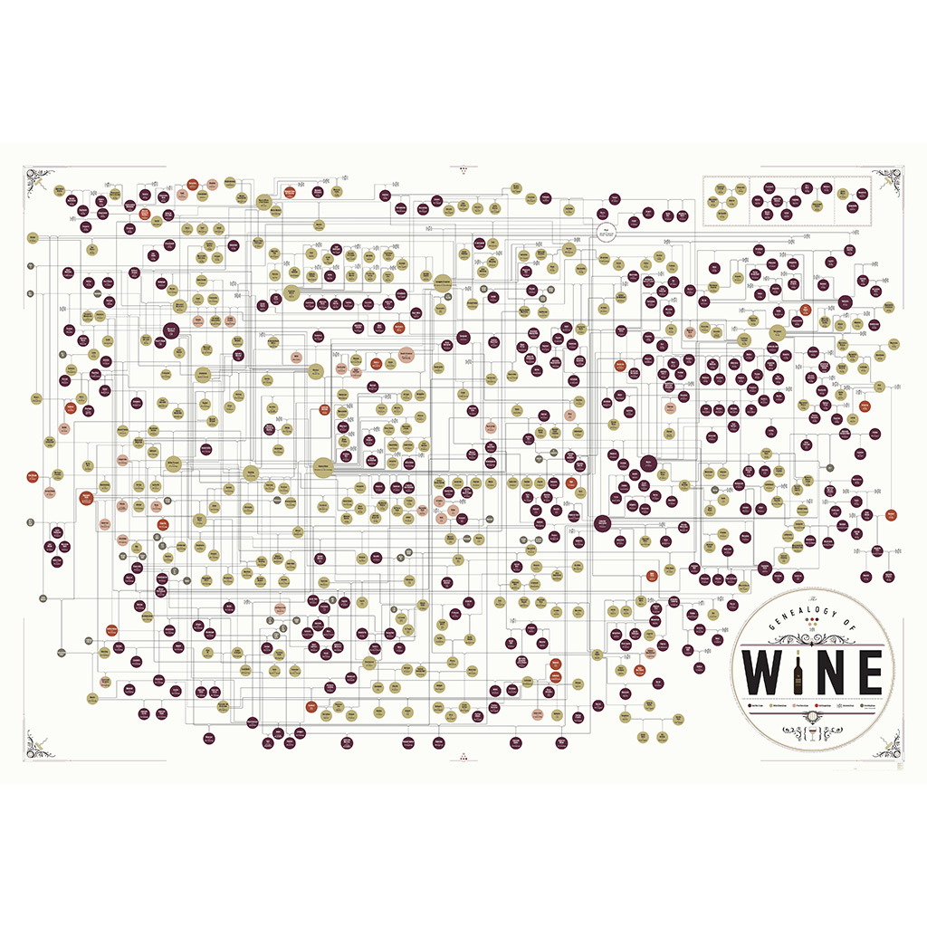 look at this insanely huge family tree of wine grapes food wine
