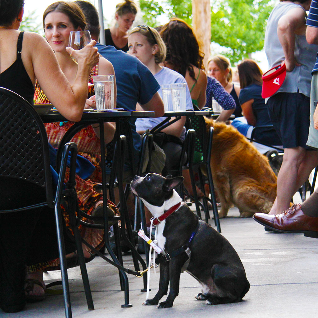 The Right Way to Bring Your Dog to a Restaurant
