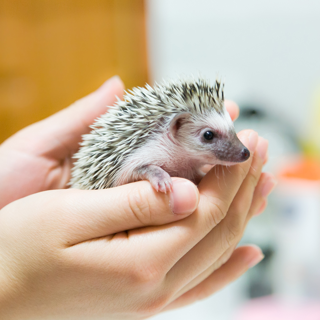HEDGEHOG CAFE FWX