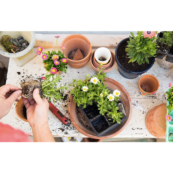 houseplants-purewow-partner-fwx
