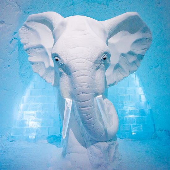 ice hotel elephant in the room