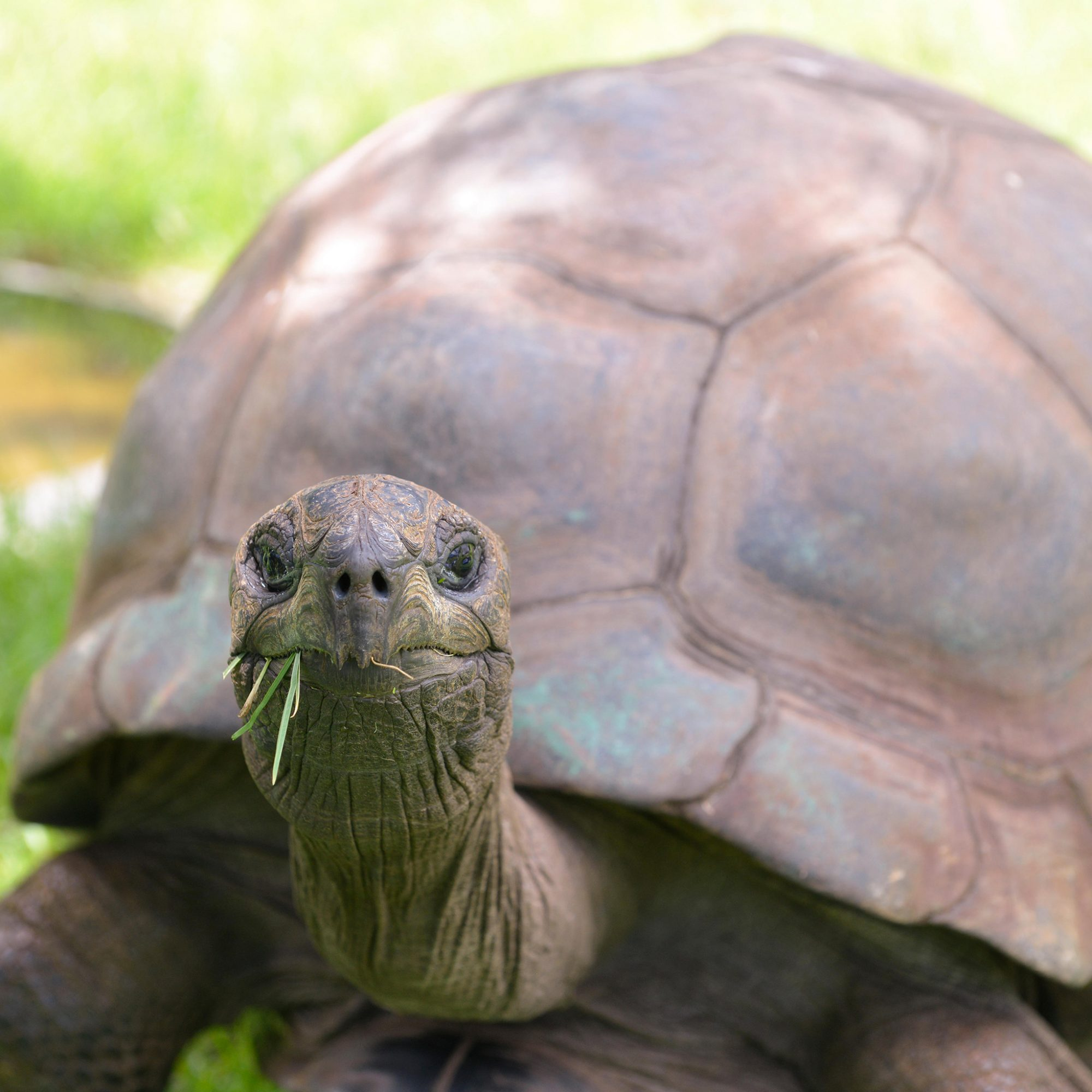 JONATHAN WORLDS OLDEST TORTOISE DIET FWX_0