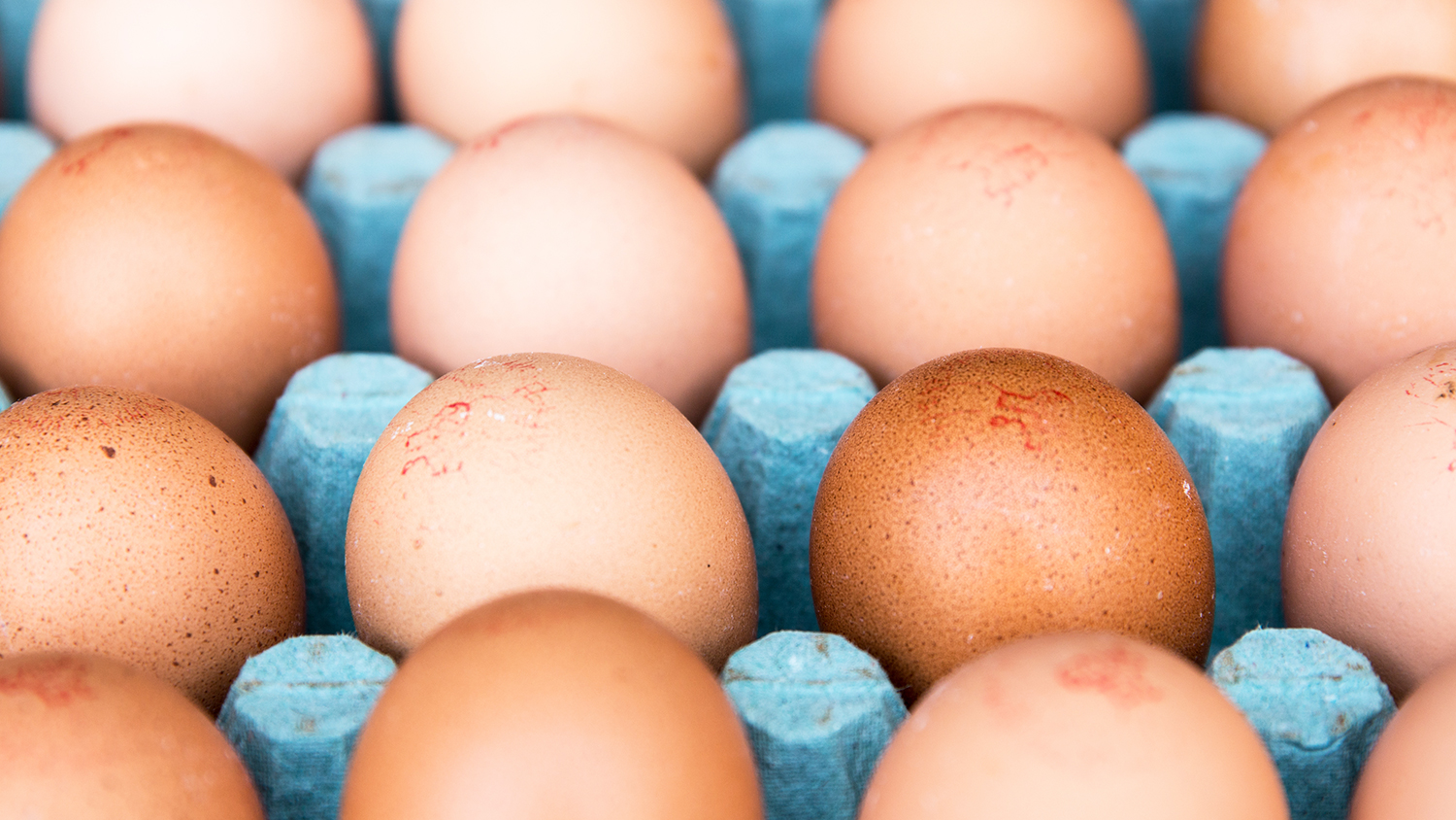 eggs low priced