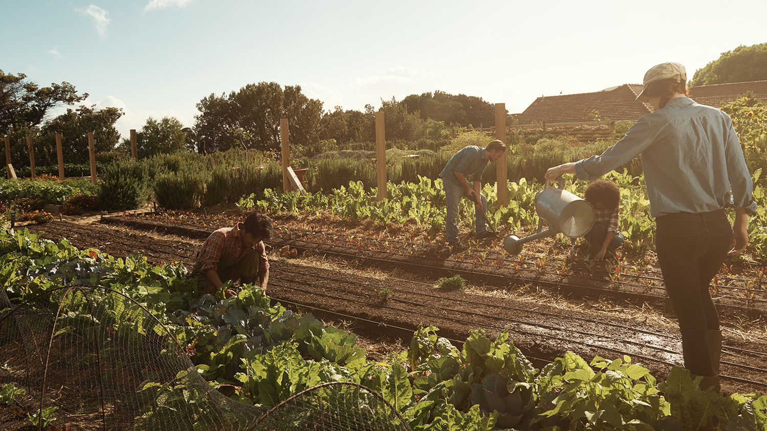 Minnesota Bill Incentivizes Selling Land to Young Farmers