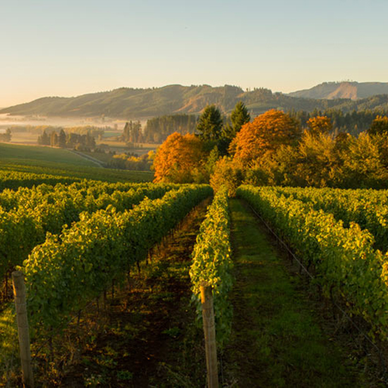 Best For Wine Lovers: Willamette Valley, OR