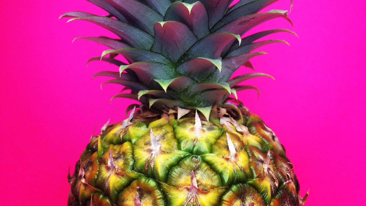 Growing a Single Pineapple Can Make You Internet Famous