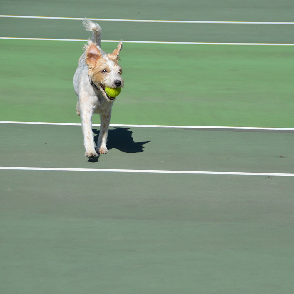 Take Your Dog With You to Tennis Camp This Summer