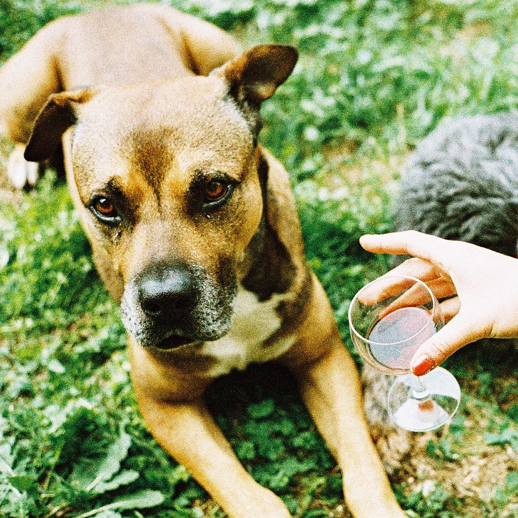 dog, wine, wine for dogs