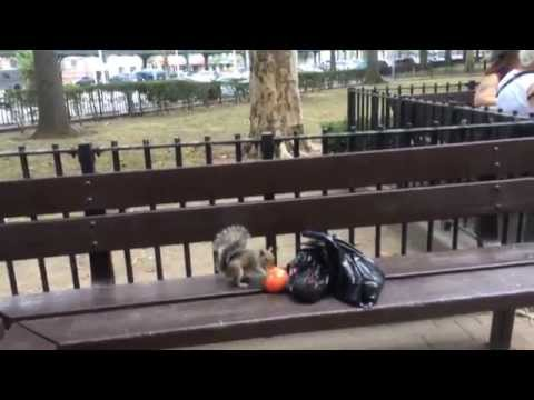 Watch a Health-Conscious Squirrel Run Off With a Tomato in a Park