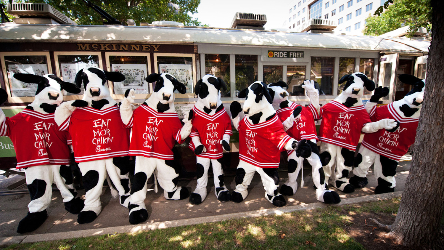 cow costume free meal chic fil a