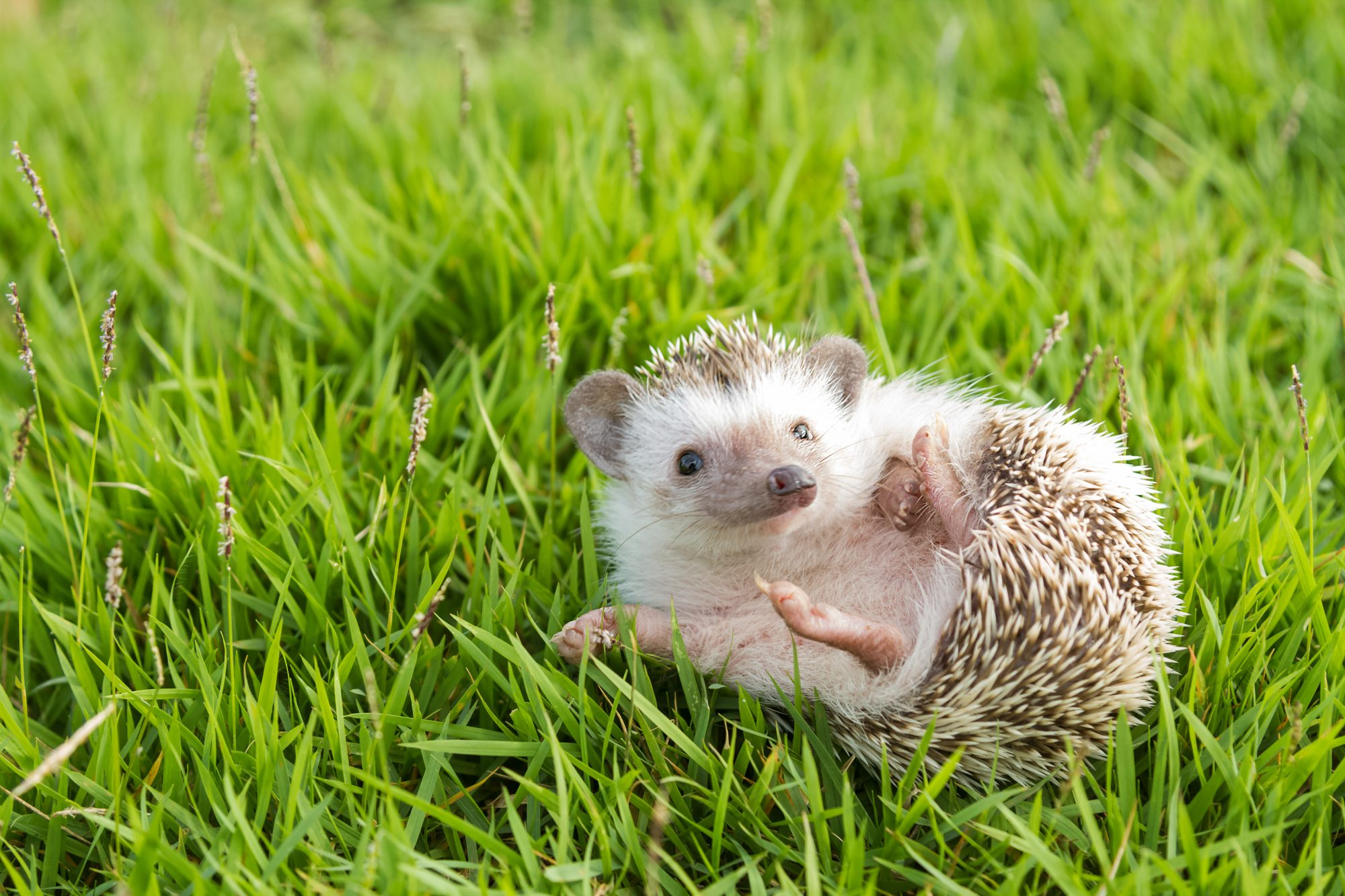 These Hedgehogs, Goats and French Bulldog Puppies Have an Important Message About Your Health