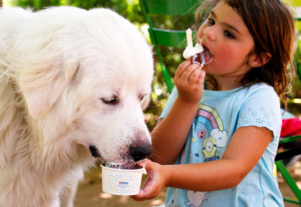big white and fluffy dog with child