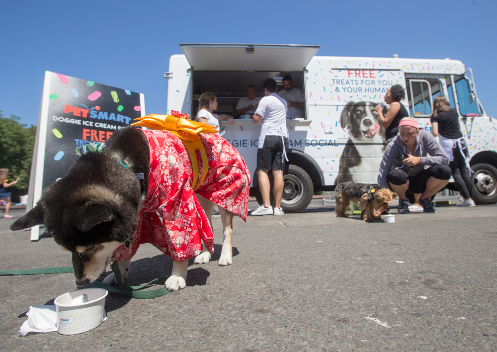 petsmart ice cream truck giveaway for dogs and owners