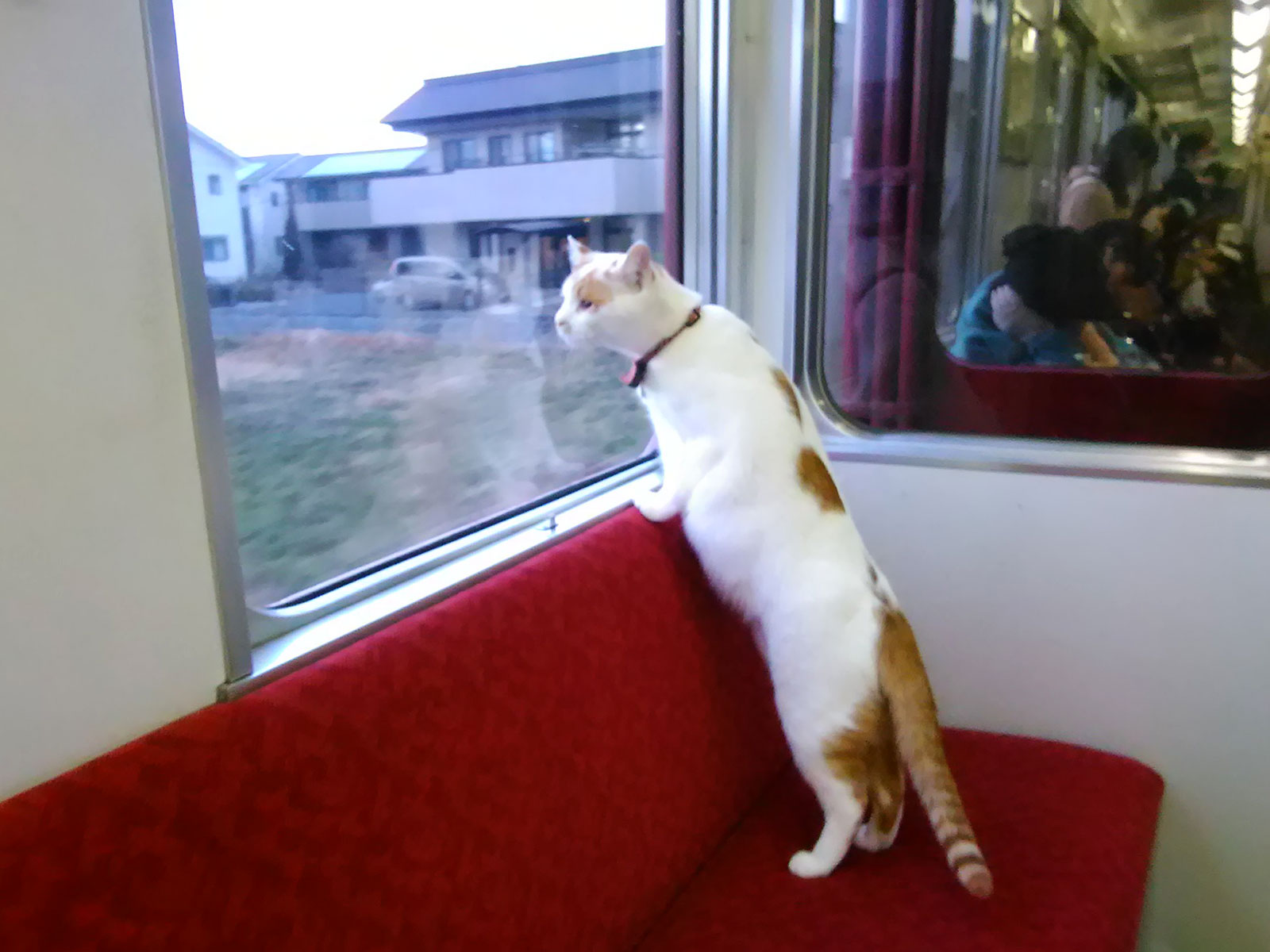 yoro railways has a cat cafe train