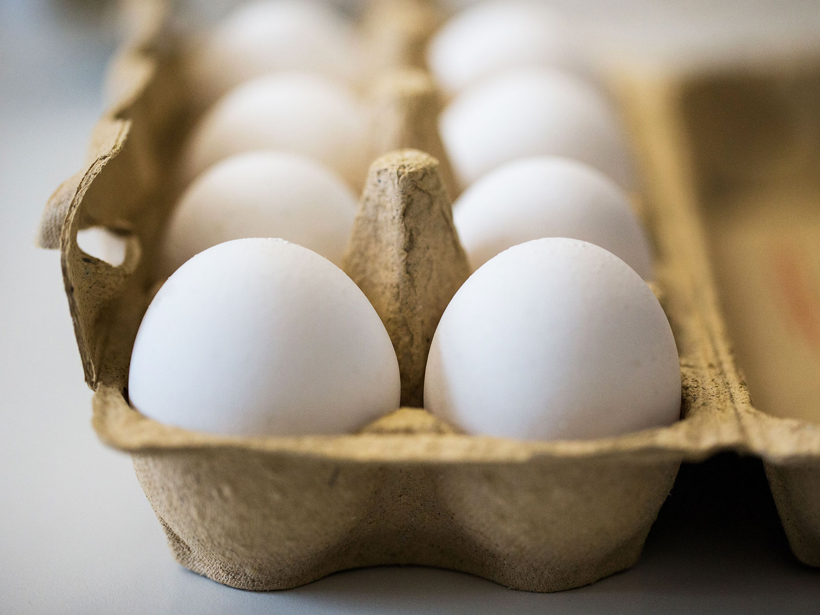 european eggs contaminated
