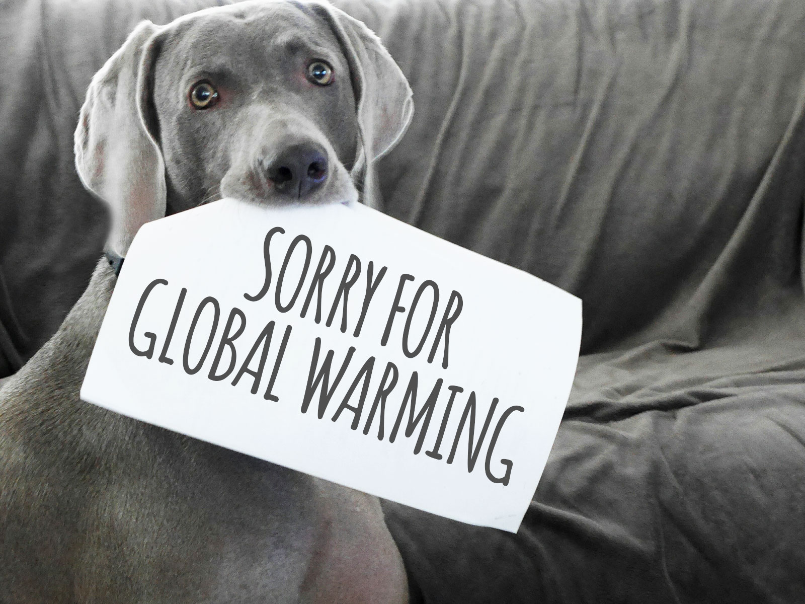 sorry for global warming