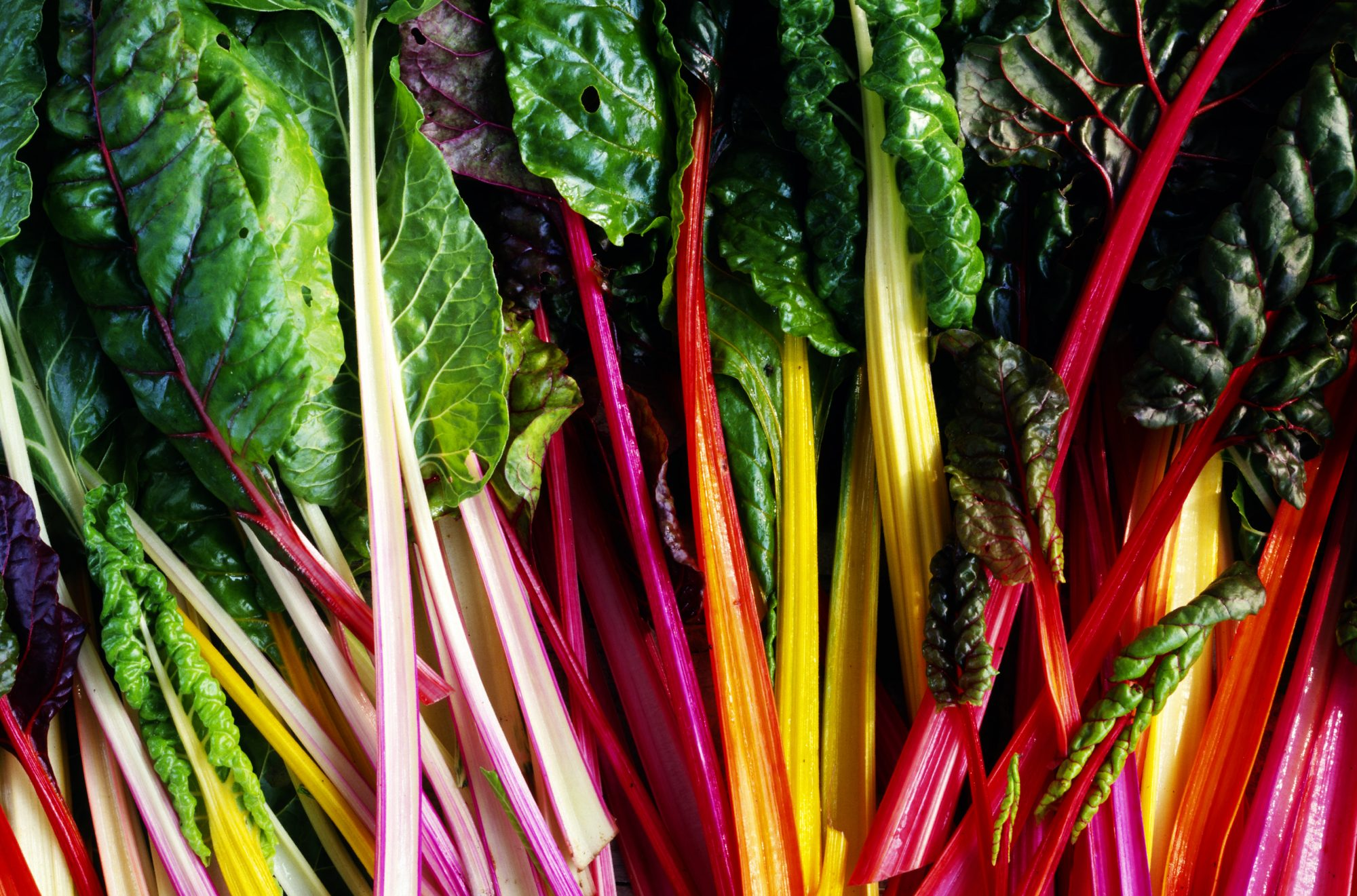 swiss-chard-blog0817.jpg