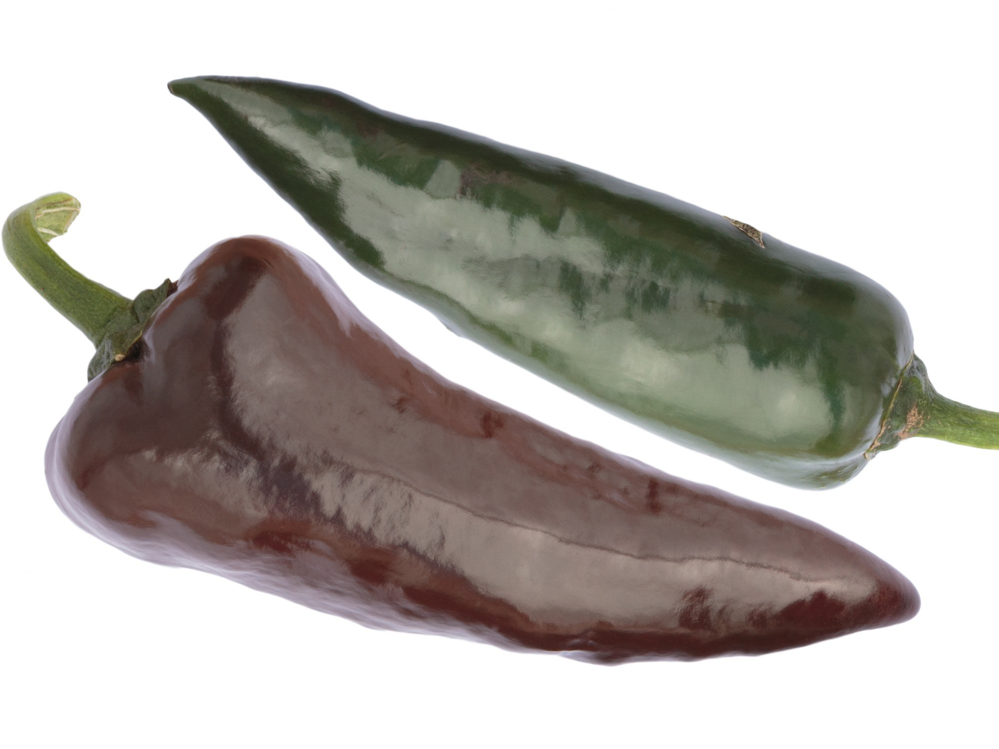 The Pasilla (Chilaca) - a brown variety of chili pepper. The rather large pods (> 15 cm) are medium hot with a heat lefel of 5-6 (from 0 to 10). A brown and a unripe green pod against white background.