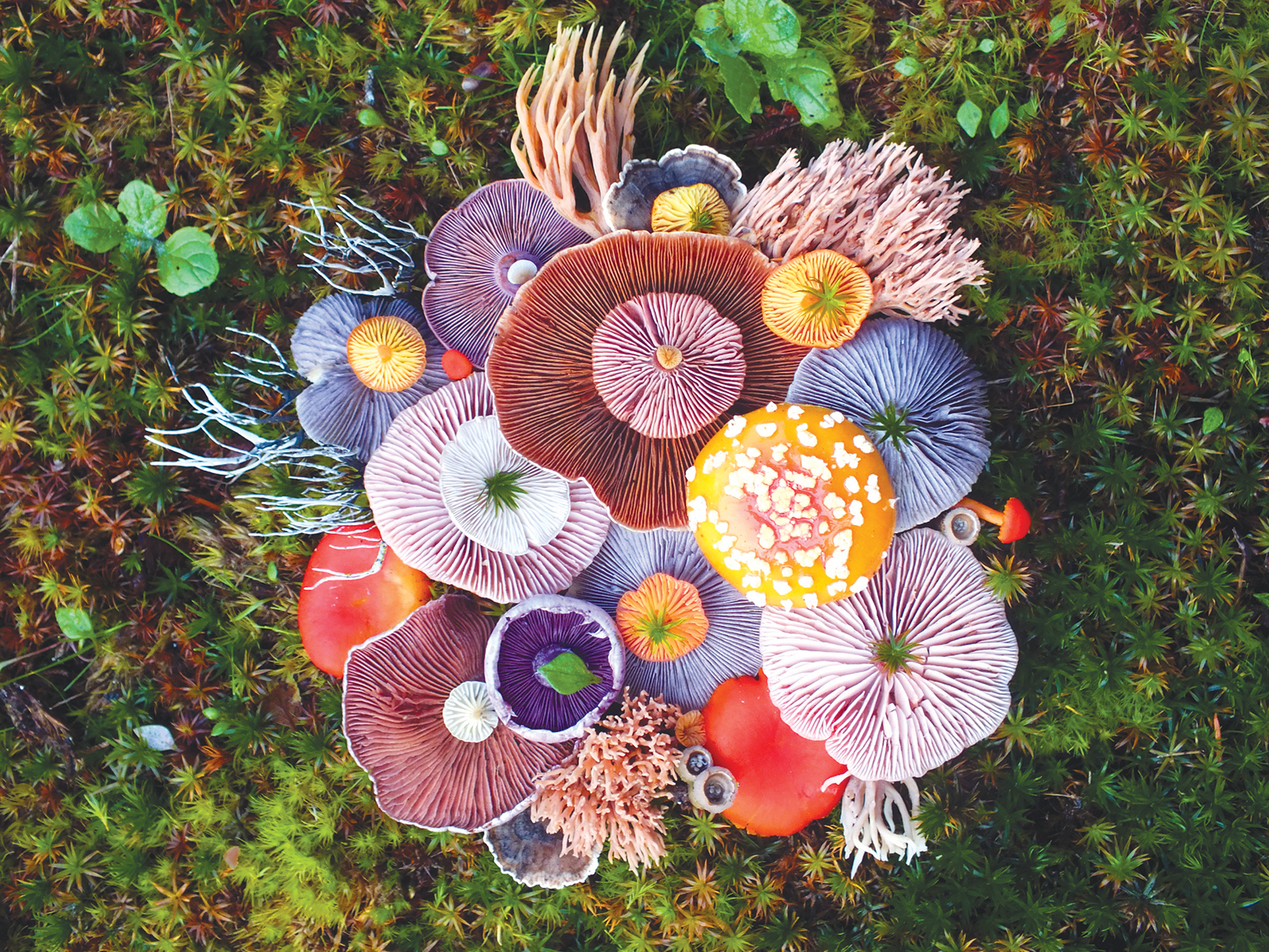 Wild Mushrooms Become Art in These Gorgeous Photos