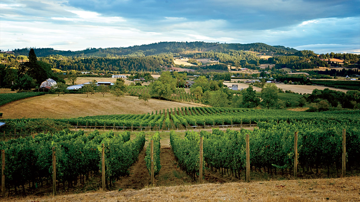Where to Drink and Eat in the Willamette Valley