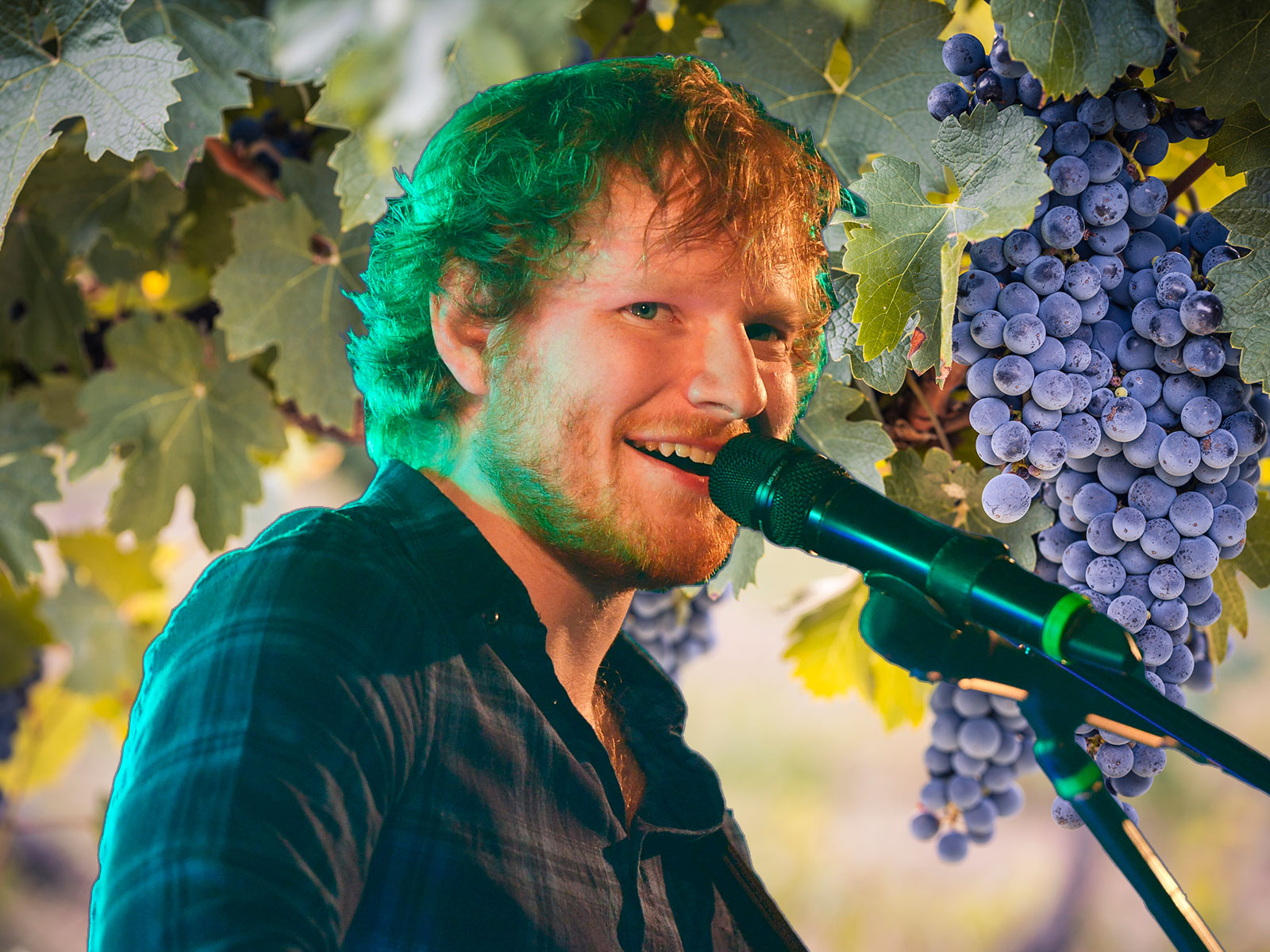 Ed Sheeran Wine Paraody