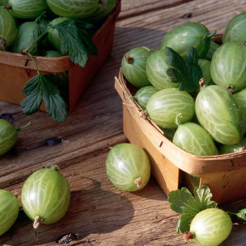 What Are Gooseberries?