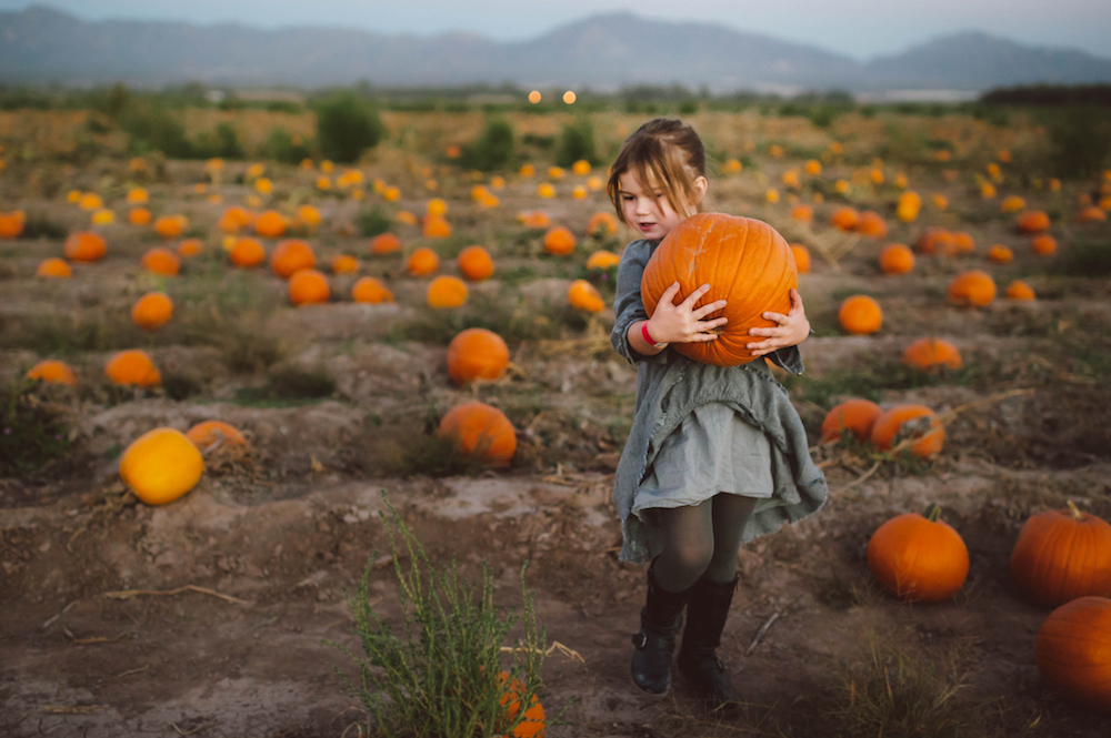 Here's Just How Crazy People Are for Pumpkin