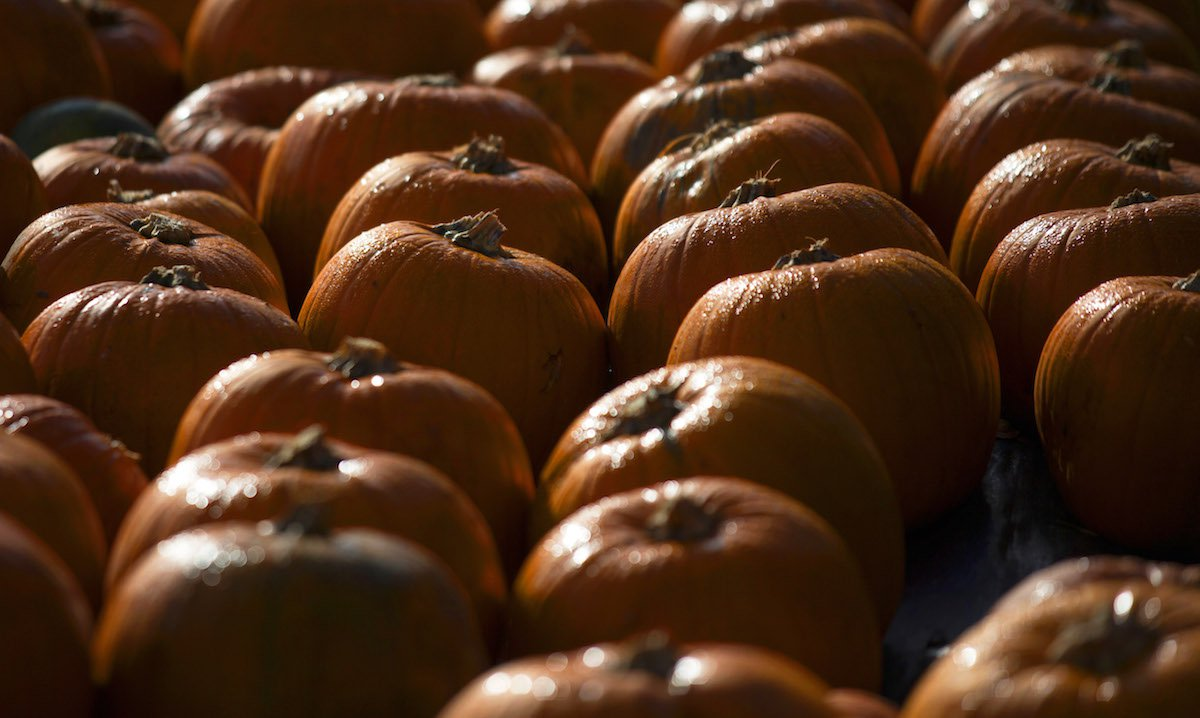 The Surprising Reason Americans Are Obsessed With Pumpkins