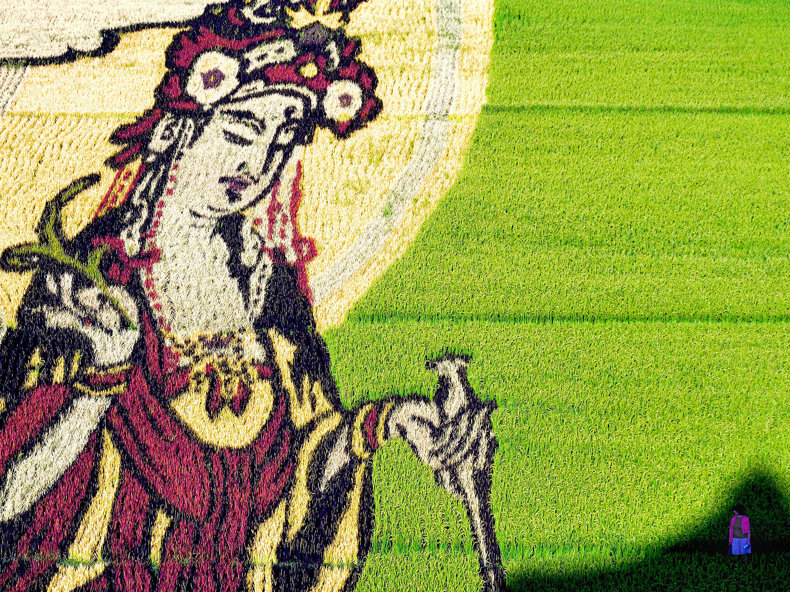 Check Out This Absolutely Stunning Rice Paddy Art